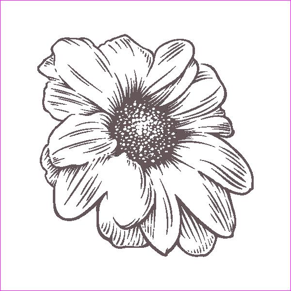 Роза, гравировка, макет, веток, вектор, качественный, нарцисс, ромашка, бесплатно, Rose, engraving, layout, branches, vector, quality